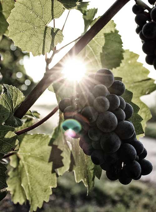 Produzione e vendita vini a Solferino